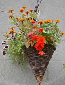 Gardening Tips for August