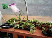 winter_gardening